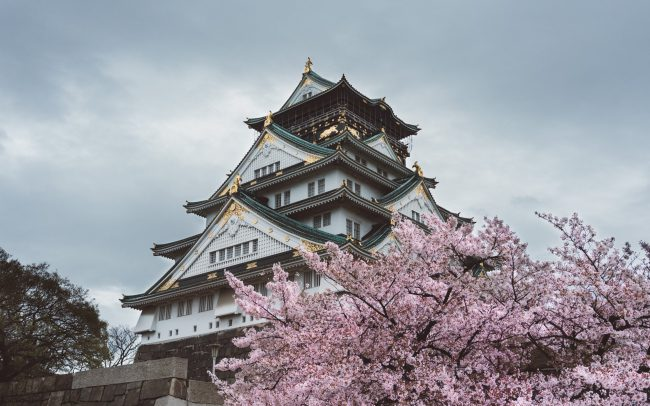 Osaka Castle during cherry blossom [David Tan]