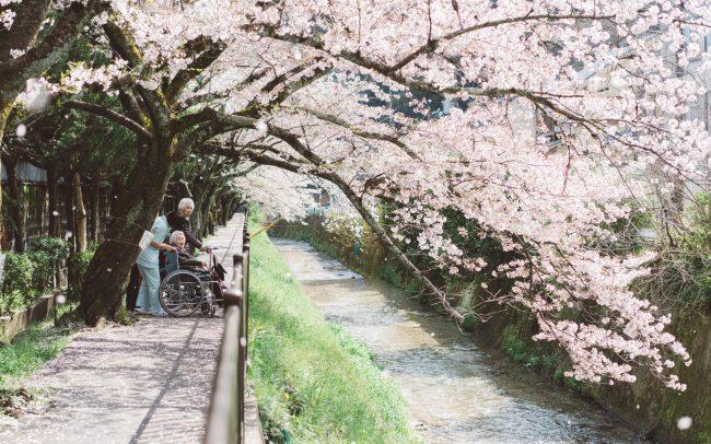 Sakura tree with 3 people under it [David Tan]