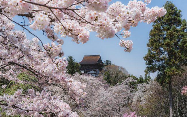 Kinpusenji Temple during cherry blossom [David Tan]