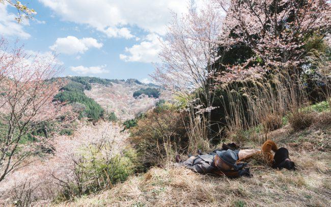 Yoshino, two people resting under cherry blossom tree [David Tan]