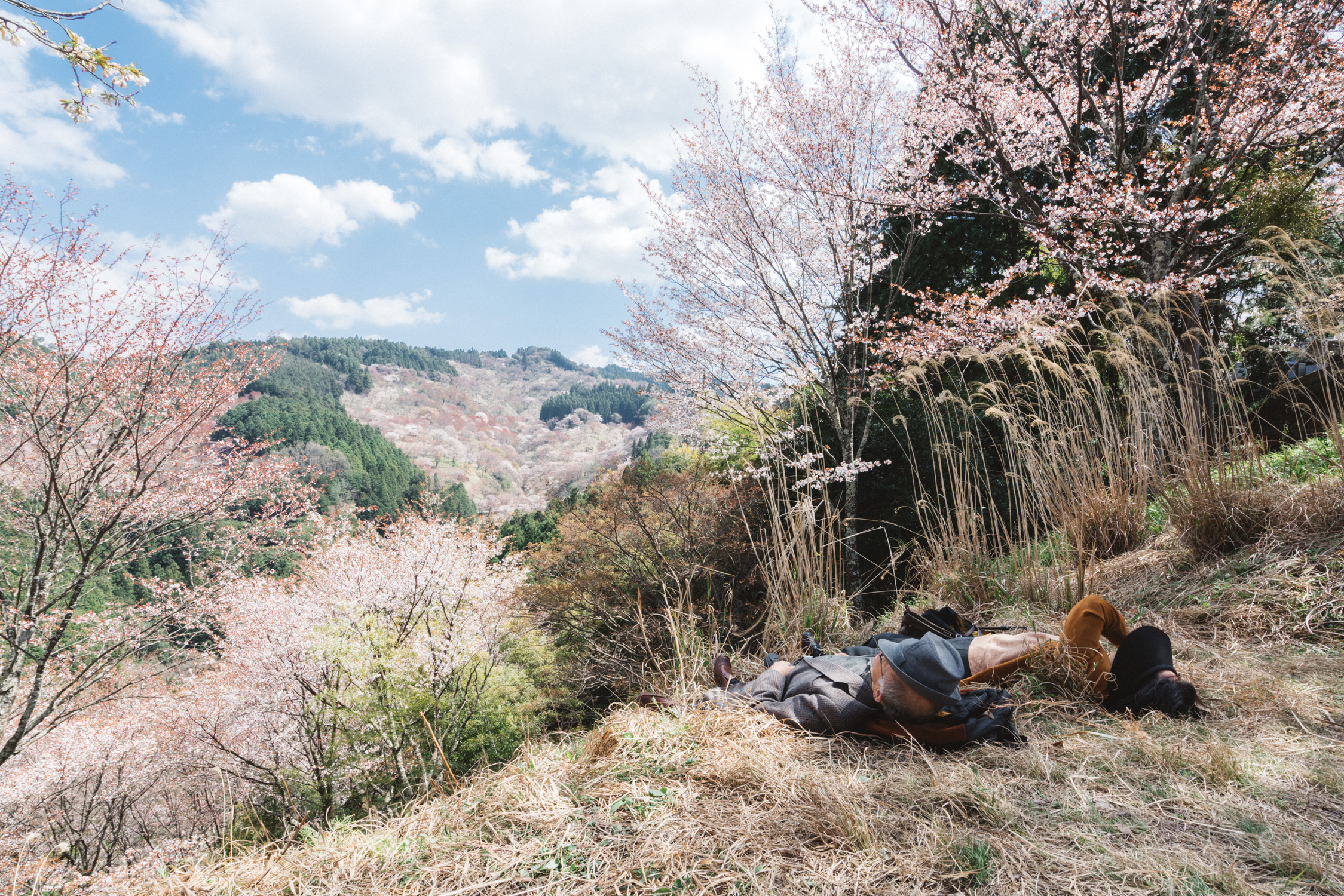 Yoshino, two people resting under cherry blossom tree [David Tan]