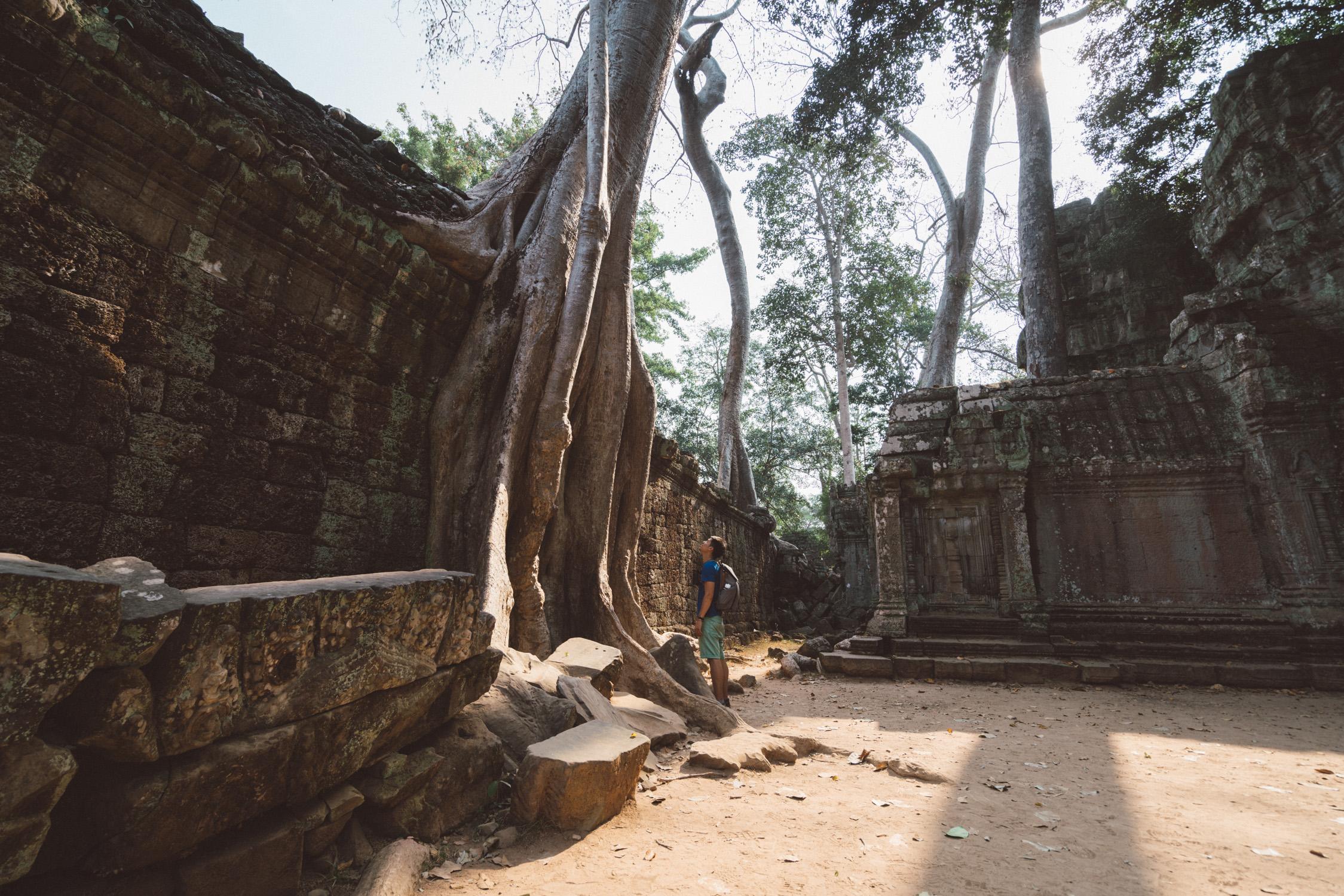 Tree Angkor Wat portrait [David Tan]