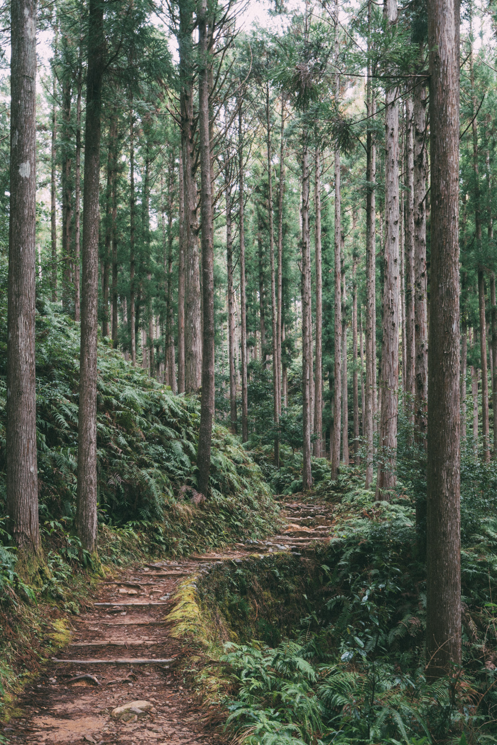 Kumano kodo trail [David Tan]