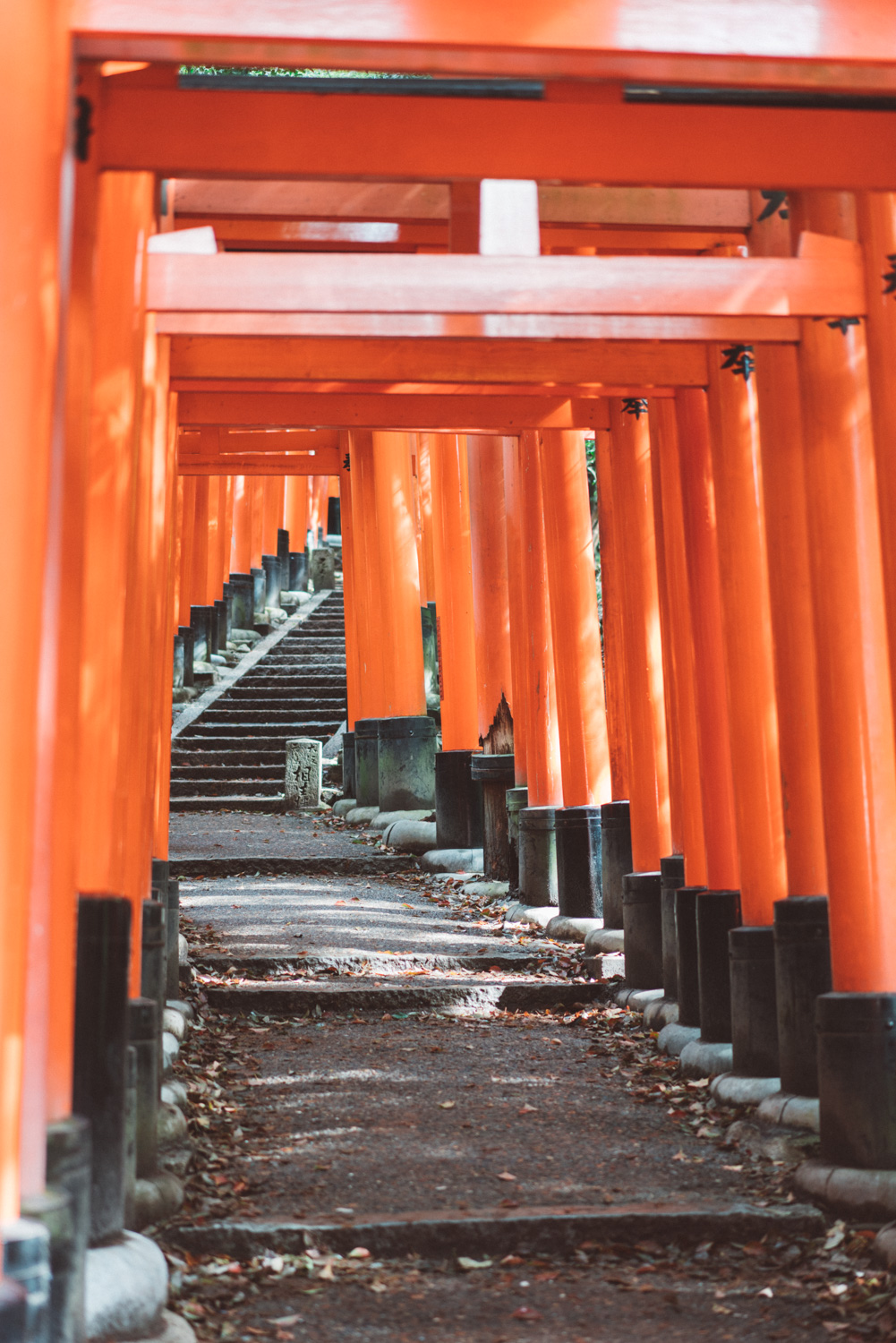 Fushimi Inari Shrine, kyoto [David Tan]