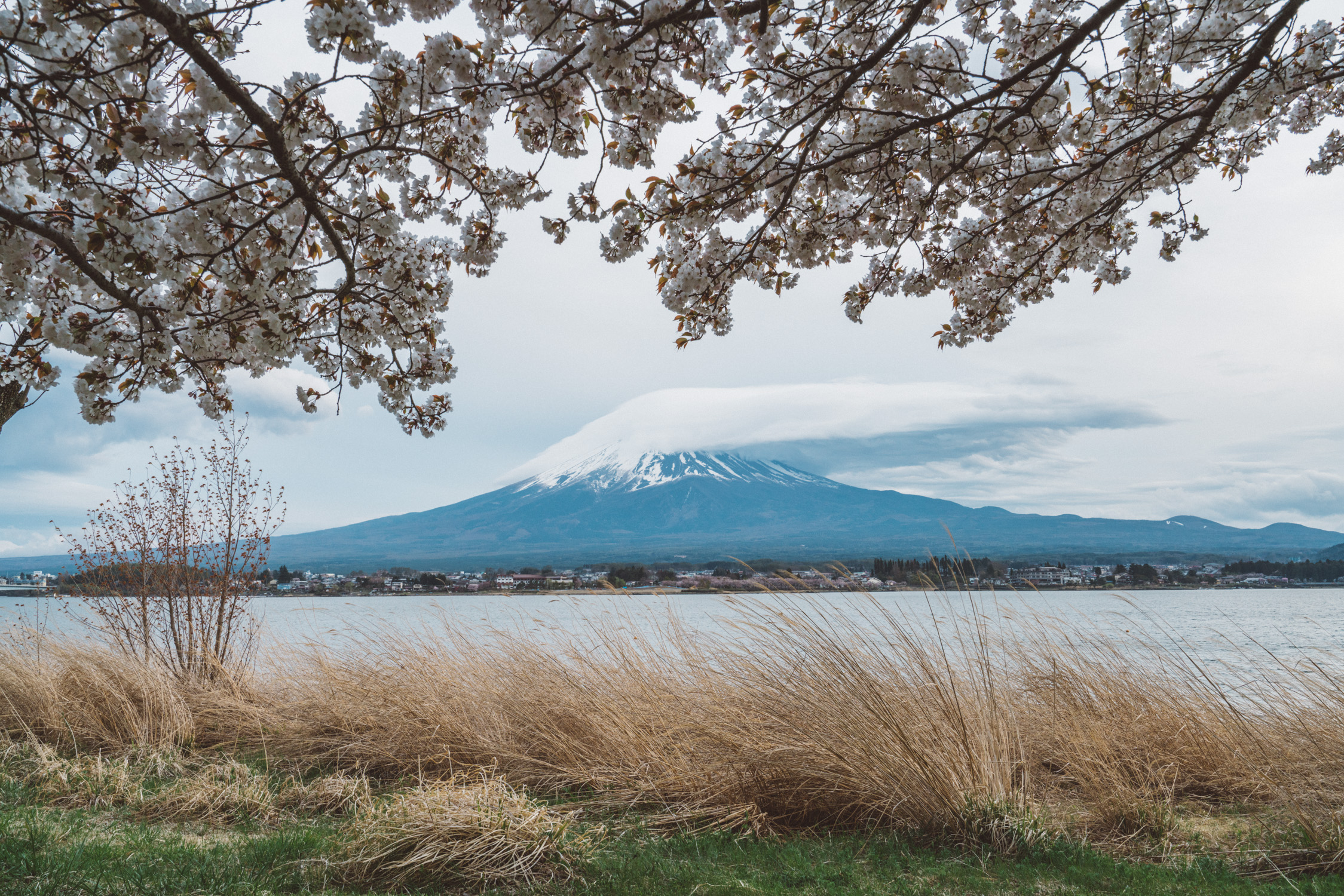 Mt-Fuji cover by clouds during cherry blossom [David Tan]