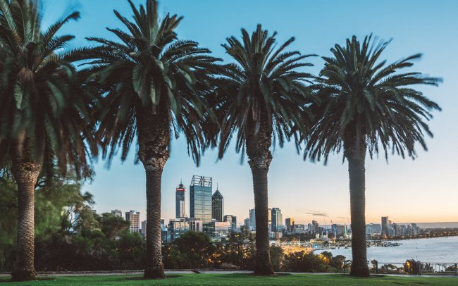 Palm trees in Perth [David Tan]